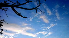 κλάδος plumeria στον ουρανό Στοκ Φωτογραφία