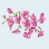 Κλάδος Sakura για τις ευχετήριες κάρτες και τους χαιρετισμούς Στοκ Εικόνες