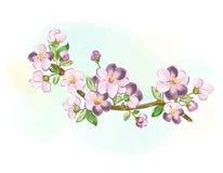 Κλάδος Sakura για τις ευχετήριες κάρτες και τους χαιρετισμούς Στοκ φωτογραφία με δικαίωμα ελεύθερης χρήσης