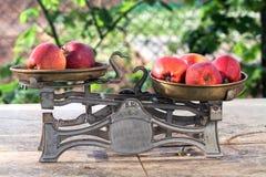 Κλίμακα και μήλο Στοκ Φωτογραφία
