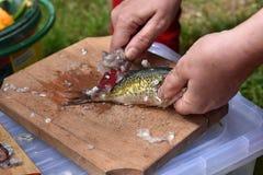 Κλίμακες καθαρισμού ψαράδων των πρόσφατα πιασμένων ψαριών Στοκ Εικόνα