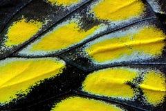 Κλίμακες πεταλούδων Στοκ φωτογραφίες με δικαίωμα ελεύθερης χρήσης