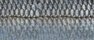 Κλίμακες των ψαριών Στοκ φωτογραφία με δικαίωμα ελεύθερης χρήσης