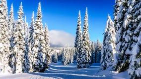Κλίσεις σκι και ένα χειμερινό τοπίο με τα χιονισμένα δέντρα στους λόφους σκι κοντά στο χωριό των αιχμών ήλιων στοκ εικόνες με δικαίωμα ελεύθερης χρήσης