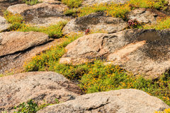 Κλίση και λουλούδι Hill Στοκ Φωτογραφία