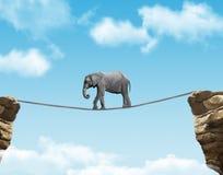 Κλασικός αφρικανικός ελέφαντας Στοκ Εικόνες