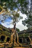 Ναός TA Prohm, Angkor, Καμπότζη Στοκ φωτογραφία με δικαίωμα ελεύθερης χρήσης