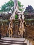 Κλασσική εικόνα του ναού TA Prohm, Angkor, Καμπότζη Στοκ Εικόνες