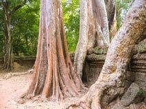 Κλασσική εικόνα του ναού TA Prohm, Angkor, Καμπότζη Στοκ φωτογραφίες με δικαίωμα ελεύθερης χρήσης