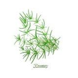 Κλαδάκια της φρέσκιας εύγευστης Rosemary στο ρεαλιστικό ύφος Στοκ Φωτογραφία