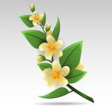 Κλαδάκι jasmine διανυσματική απεικόνιση