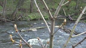 Κλαδίσκοι δέντρων κάστανων conker και ρέοντας νερό 4K απόθεμα βίντεο