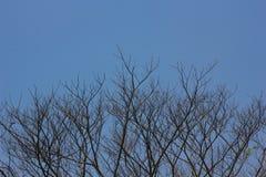Κλαδίσκοι δέντρων Στοκ Εικόνες