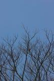 Κλαδίσκοι δέντρων Στοκ Φωτογραφία