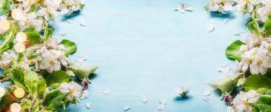 Κλαδίσκοι ανθών άνοιξη στο μπλε τυρκουάζ υπόβαθρο, τοπ άποψη, πλαίσιο, άνοιξη συνόρων Στοκ Εικόνες