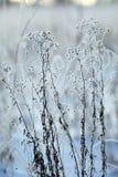 Κλαδίσκοι και χλόη που καλύπτονται χειμερινοί με τον παγετό και το χιόνι Στοκ Εικόνα