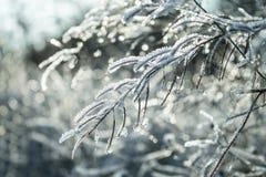 Κλαδίσκοι κρυστάλλου Στοκ Εικόνες