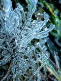 Κλαδίσκοι που περιβάλλονται στον πάγο στοκ φωτογραφίες με δικαίωμα ελεύθερης χρήσης