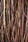 κλαδίσκοι Στοκ εικόνα με δικαίωμα ελεύθερης χρήσης