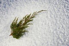 Κλαδίσκος ιουνιπέρων Στοκ φωτογραφία με δικαίωμα ελεύθερης χρήσης