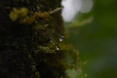 Κλαδίσκος με μια πτώση του νερού στο πράσινο θολωμένο φύση υπόβαθρο Στοκ Φωτογραφίες