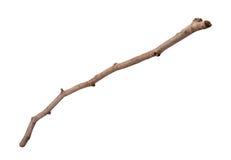 Κλαδίσκος που απομονώνεται ξύλινος Στοκ Φωτογραφίες