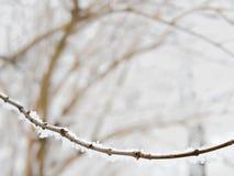 Κλαδίσκος που καλύπτεται με το χιόνι, wintertime, copyspace Στοκ Εικόνες