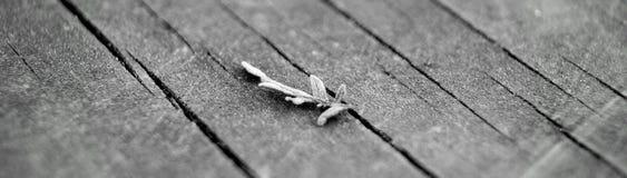 Κλαδίσκος στο ξύλο Στοκ Εικόνα