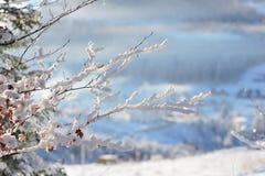 Κλαδίσκος στο χιόνι Στοκ Εικόνες