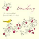 Κλαδίσκος φραουλών με τα φύλλα και τα μούρα κλαδίσκος πουλιών Στοκ φωτογραφία με δικαίωμα ελεύθερης χρήσης