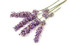 Κλαδίσκος Lavender σε ένα άσπρο υπόβαθρο στοκ φωτογραφίες με δικαίωμα ελεύθερης χρήσης