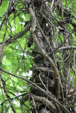 Κλαδιά δέντρων φύσης που μπλέκονται Στοκ φωτογραφία με δικαίωμα ελεύθερης χρήσης