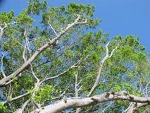 Κλαδιά δέντρων Στοκ εικόνα με δικαίωμα ελεύθερης χρήσης