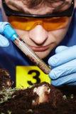 Κλείνοντας σωλήνας δοκιμής με τη συλλεχθείσα προνύμφη μυγών στη σκηνή εγκλήματος Στοκ Εικόνες