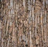 Κλείστε αυξημένος της καφετιάς σύστασης φλοιών δέντρων στοκ φωτογραφία με δικαίωμα ελεύθερης χρήσης