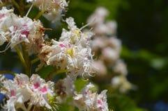 Κλείστε αυξημένος των λουλουδιών στοκ εικόνα με δικαίωμα ελεύθερης χρήσης