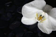 Κλείστε επάνω άσπρο orchid Στοκ Φωτογραφίες