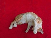 Κλείστε επάνω λίγη γάτα Στοκ Εικόνες