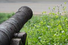 Κλείστε επάνω, εκλεκτική εστίαση, το αρχαία πυροβόλο και τα λουλούδια Στοκ Εικόνα