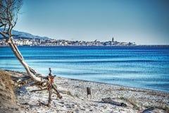 Κλείστε επάνω ενός δέντρου πεύκων από την ακτή στην παραλία της Μαρίας Pia Στοκ φωτογραφία με δικαίωμα ελεύθερης χρήσης