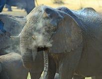 Κλείστε επάνω ενός ελέφαντα ψεκαμένος με τη σκόνη που κρατά δροσερή στο εθνικό πάρκο Hwange, Ζιμπάμπουε, Νότιος Αφρική Στοκ εικόνες με δικαίωμα ελεύθερης χρήσης
