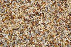 Κλείστε επάνω ενός μίγματος υγιών σπόρων που αντιμετωπίζονται άνωθεν Στοκ εικόνα με δικαίωμα ελεύθερης χρήσης