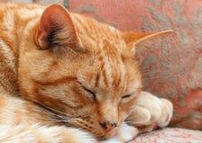 Κλείστε επάνω ενός προσώπου γατών gingers Στοκ φωτογραφίες με δικαίωμα ελεύθερης χρήσης