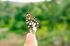 Κλείστε επάνω μέρος του φτερού πεταλούδων στο υπόβαθρο φύσης Στοκ Φωτογραφία