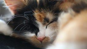 Κλείστε επάνω μιας νυσταλέα γάτας, μιας στήριξης και να αναβοσβήσει φιλμ μικρού μήκους