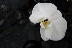 Κλείστε επάνω μιας όμορφης άσπρης ορχιδέας Στοκ Φωτογραφίες