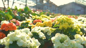 Κλείστε επάνω πολλών λουλουδιών στο gardenhouse 4K φιλμ μικρού μήκους