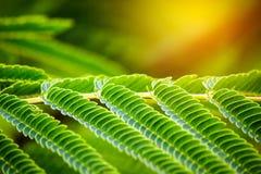Κλείστε επάνω πράσινο βγάζει φύλλα το υπόβαθρο σχεδίων με το φως Στοκ φωτογραφία με δικαίωμα ελεύθερης χρήσης