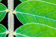 Κλείστε επάνω πράσινο βγάζει φύλλα το υπόβαθρο σύστασης σχεδίων Στοκ φωτογραφία με δικαίωμα ελεύθερης χρήσης