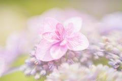 Κλείστε επάνω σε ένα ρόδινο λουλούδι Στοκ Εικόνες